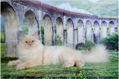 Gr.I.Ch.Biskvit Raduga zhelaniy невский маскарадный кот